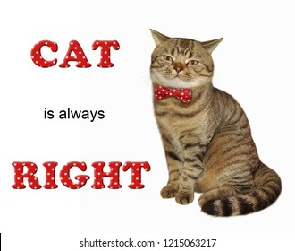 The cat in a red bow tie is sitting. Cat is always right. White background.