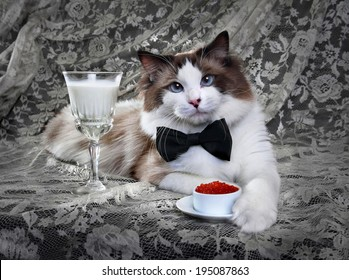 Cat with red caviar