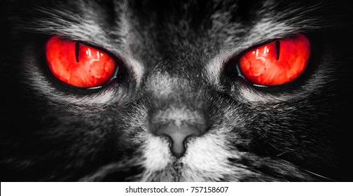 a cat with red devil eyes, an evil terrible face from a nightmare, looks directly into the soul, camera
