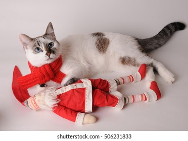 Cat in red scarf with Santa Claus on a light background