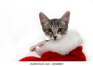 Cat in a red and white Christmas stocking