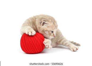 cat and red wool