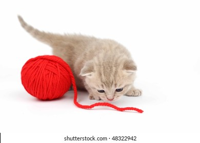 cat and red wool ball