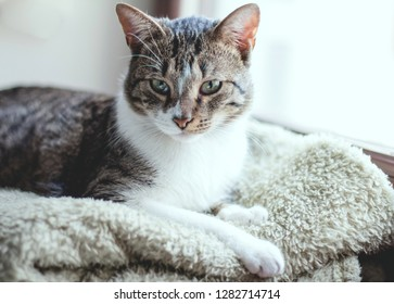Cat relaxing at home by the window on warm blanket