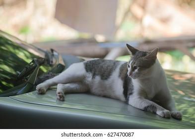 Cat relaxing on car bonnet,