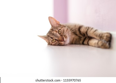 Cat relaxing on the floor during sunny day
