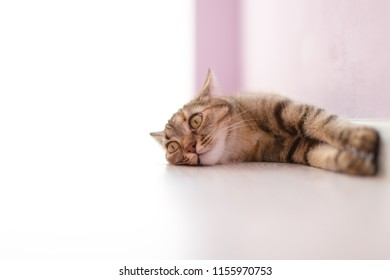 Cat relaxing on the floor with interesting face
