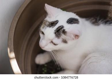 Cat relaxing on flower pot