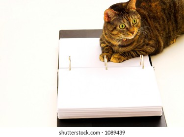 Cat relaxing on her notebook.