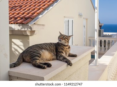 Cat relaxing on a roof