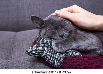 Cat is relaxing on the sofa
