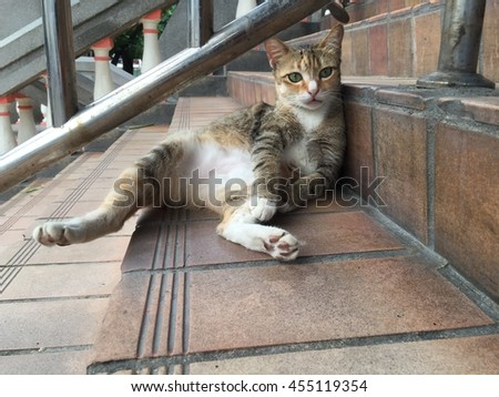 A Cat Relaxing On A Staircase