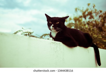 Cat rest on white wall with tree background, Vintage color style