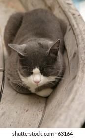 cat resting in a boat