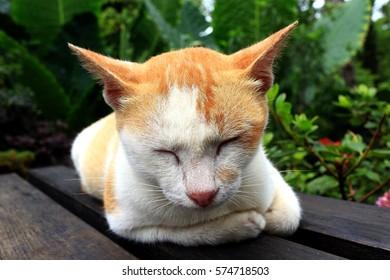 Cat resting in garden