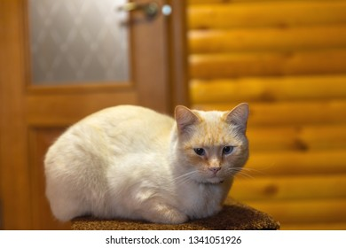 Cat resting indoors on chair closeup photo