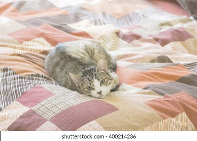 Cat resting on a bed quilt and looking at the camera.