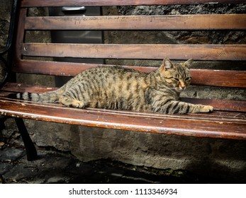 Cat resting on a bench in Orvieto, Umbria Italy