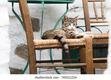 Cat resting on a chair, Amorgos island, Greece