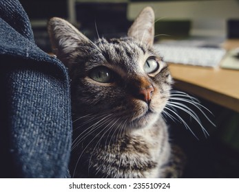 Cat resting on the lap of a person at home