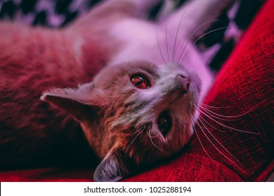 Cat resting on a sofa upside down with red light