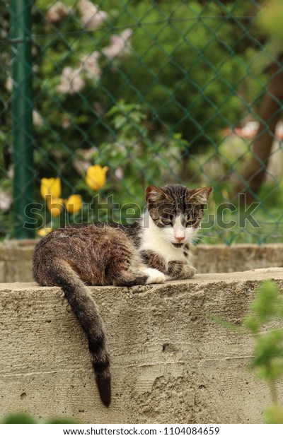 The cat is resting on the street