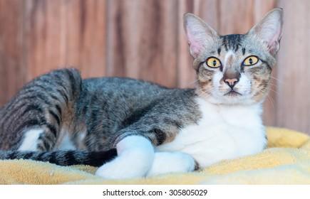 Cat resting on yellow carpet