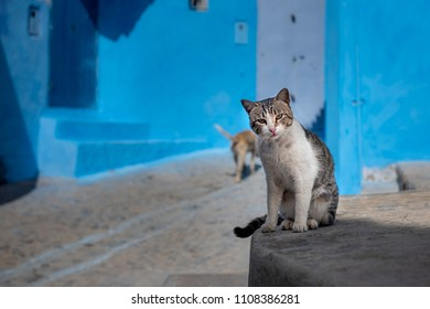Cat resting in a street in Chefchaouen, Morocco