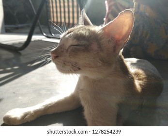 the cat is resting at sunlight