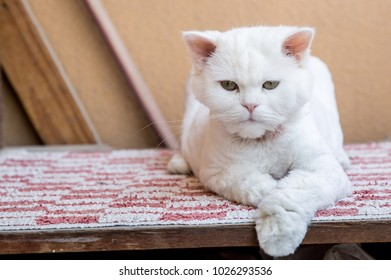 A cat rests on table top in the shade of the day.
