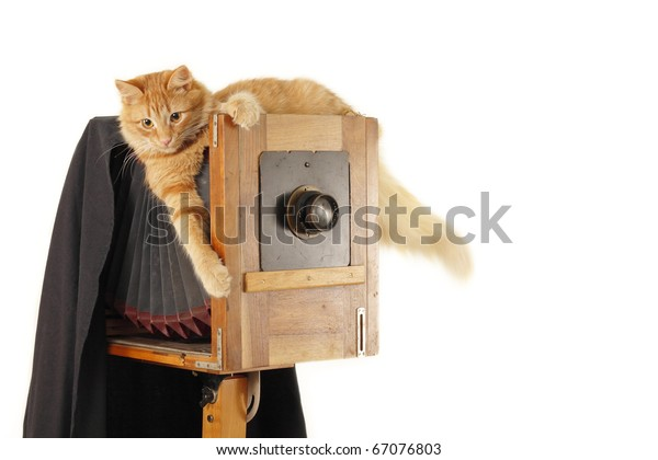 cat retro photographer with vintage camera in studio isolated on white background