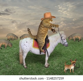 The cat riding a horse grazes its sheep in a meadow.