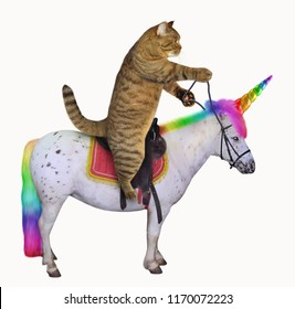 The cat is riding the real unicorn. White background.
