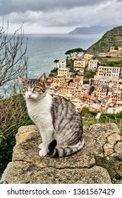 Cat in Riomaggiore Italy.