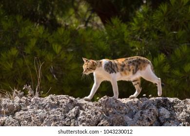 A Cat runs across a Stone Wall