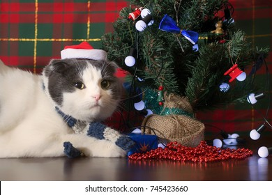 Cat in Santa Claus cap lying under the New Year tree