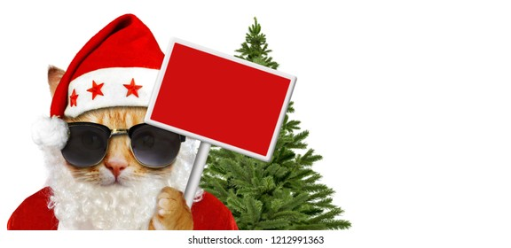 Cat in santa claus costume with sign