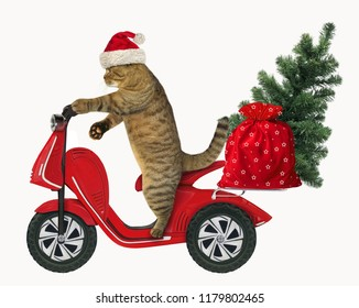 The cat in a Santa Claus hat with a bag of toys and the Christmas tree is on a red moped. White background.