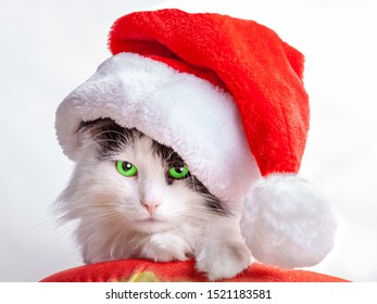 cat in santa claus hat close-up on a white background