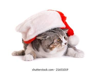 Cat in a Santa Claus  Headdress