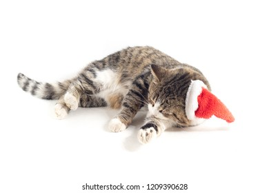 cat with santa hat isolated on white background
