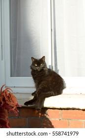 Cat sat in sun on window sill