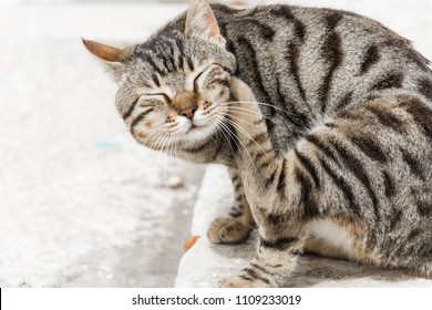A cat scratching itself