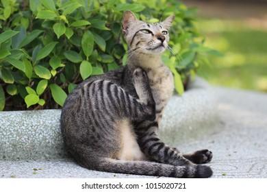 Cat scratching neck