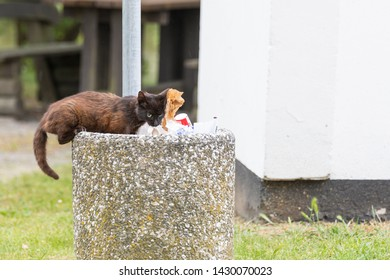 A cat searches the wastebasket for food