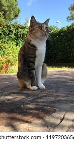 Cat see over scene