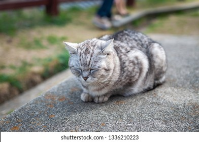 """A cat seen on Mt. Senkoji's Onomichi Cat Alley, or also known as """"Neko no Hosomichi"""", which is full of loitering cats, located in Japan's Hiroshima Prefecture."""