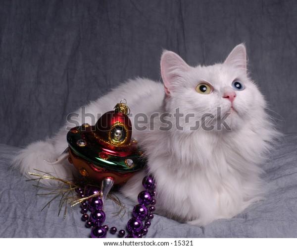 Cat sees UFO