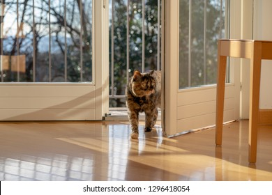 """Cat series """"Walking in the house"""""""