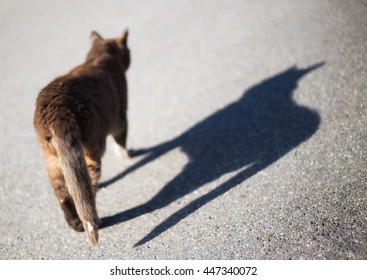 A cat with shadow